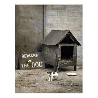 Postards divertidos del perro tarjetas postales