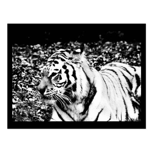 Postcard-Animals-15 Postal