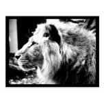 Postcard-Animals-21 Postales
