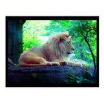 Postcard-Animals-27 Tarjeta Postal
