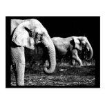 Postcard-Animals-32 Postales