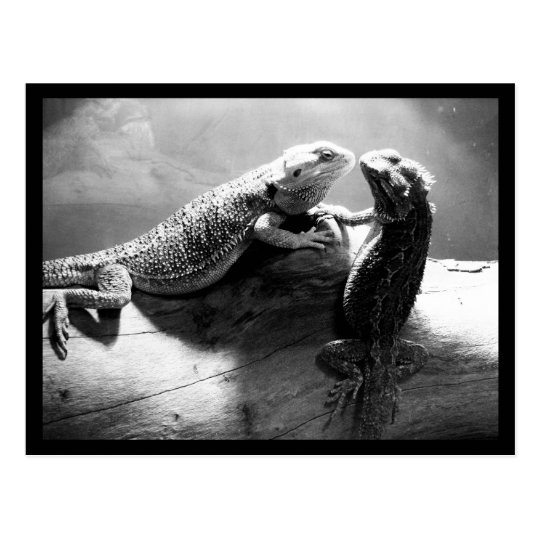Postcard-Animals-33 Tarjetas Postales