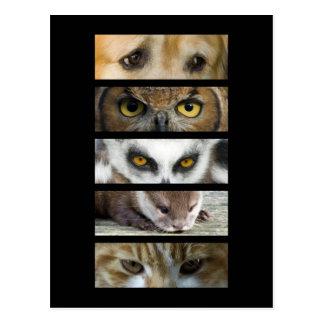 Postcard - Animals Eyes
