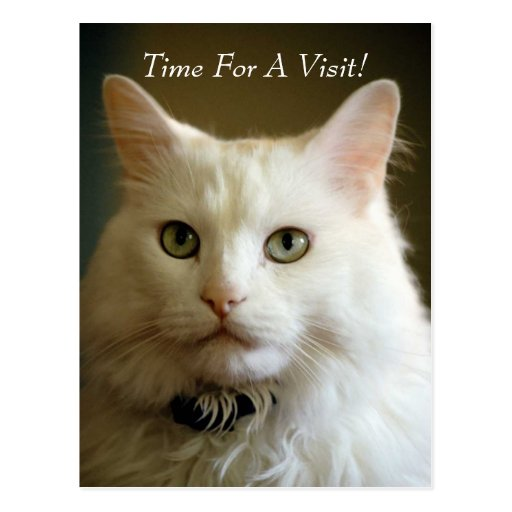 POSTCARD ~ APPOINTMENT TIME VETERINARIAN REMINDER