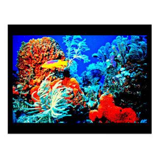 Postcard-Aquatic Gallery-14 Postcard
