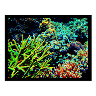 Postcard-Aquatic Gallery-20 Postcard