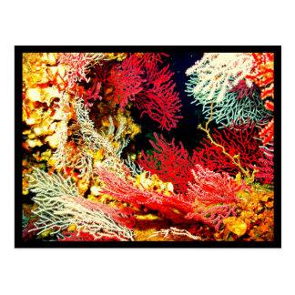Postcard-Aquatic Gallery-26 Postcard