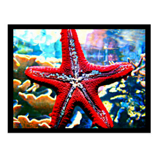 Postcard-Aquatic Gallery-27 Postcard