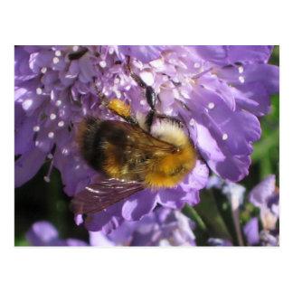 Postcard - Bee on Scabious Flower