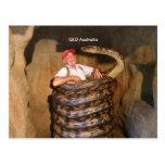 Postcard Big Snake QLD Australia Large Snake Post Cards