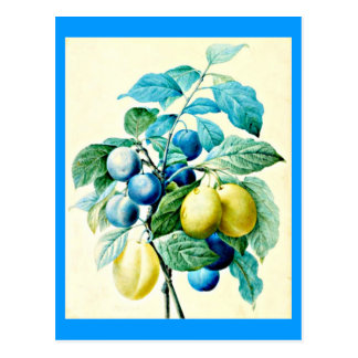 Postcard-Botanicals-Pierre Joseph Redoute 21