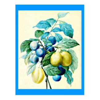 Postcard-Botanicals-Pierre Joseph Redoute 21 Postcard