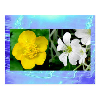 Postcard - Buttercup and Campion