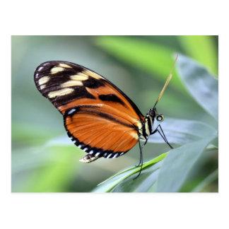 Postcard - Butterfly1