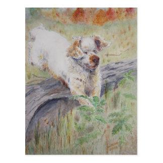 postcard - Captivating - Clumber Spaniel