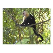Postcard Capuchin Monkey Costa Rica