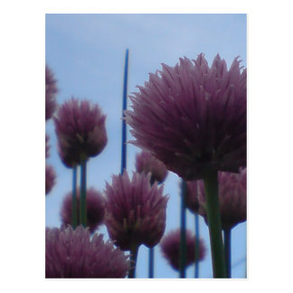Postcard - Chives    Image 1
