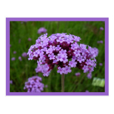 Postcard-Color Therapy-Purple 2