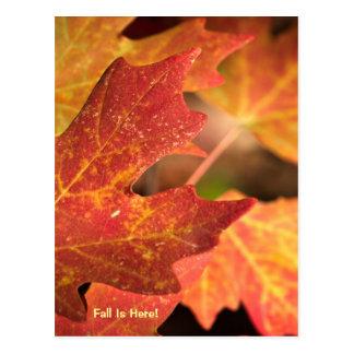 Postcard: Colors Of Fall (Portrait) Postcard