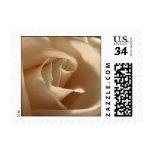 Postcard Cream Rose Stamps