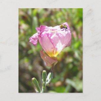 postcard - cucumber beetle postcard