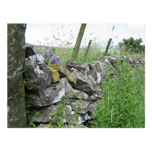 Postcard: Derbyshire Stone Wall
