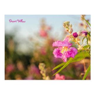 Postcard: Desert Willow Flower #6 Postcard