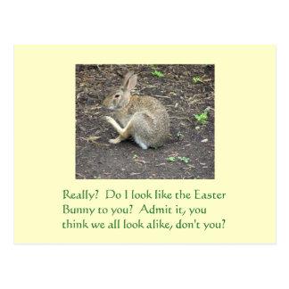"postcard, ""Do I look like the Easter Bunny to you? Postcard"