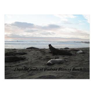 Postcard: Elephant Seals, Piedras Blancos