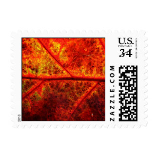 Postcard Fall Leaf Autumn Leaf Foliage Fall Weddin Postage