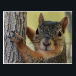 "Postcard featuring Tree Squirrel<br><div class=""desc"">Fun card to send to any of your friends!</div>"