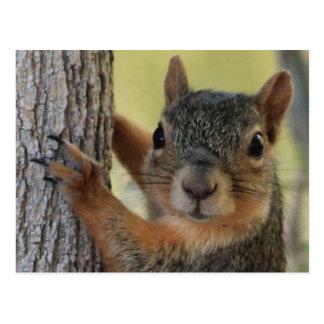 Postcard featuring Tree Squirrel