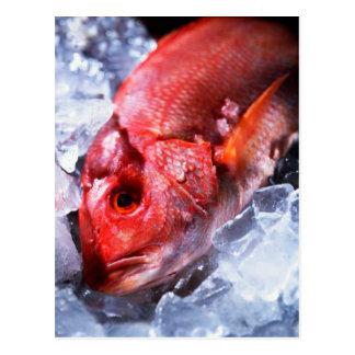 POSTCARD FISH ON ICE
