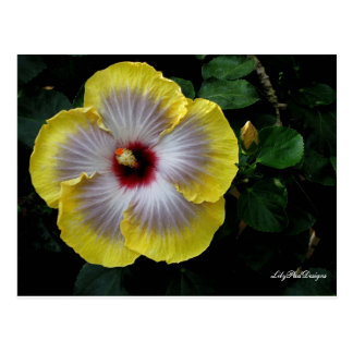 Postcard Floral Chinese Yellow Hibiscus