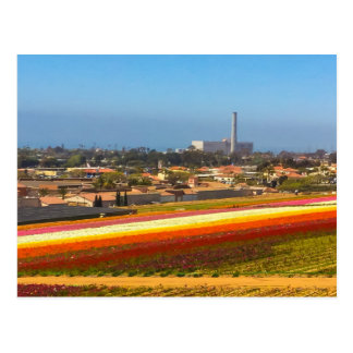 Postcard Flowers Fields Carlsbad, CA