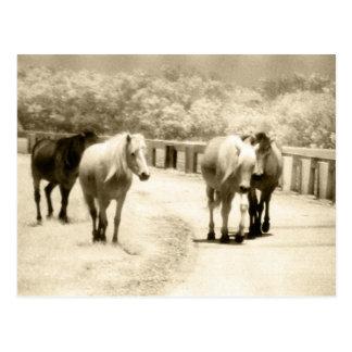 Postcard - Four Wild Ponies