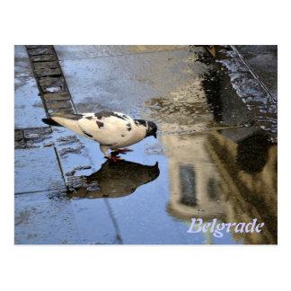 Postcard from Belgrade