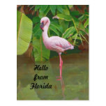 Postcard From Florida With Pink Flamingo at Zazzle