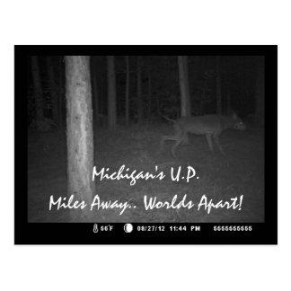 Postcard Game Cam Unusual Wild Canine Dog U.P. MI