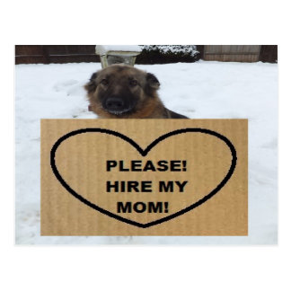 Postcard German Shepherd Please Hire My Mom