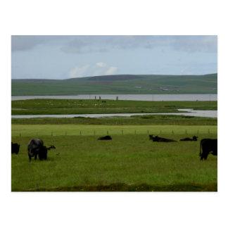 Postcard Grazing Orkney