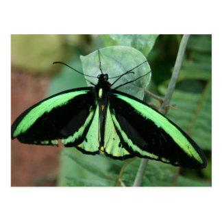 Postcard: Green Butterfly Postcard