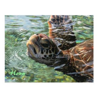 Postcard: Green Sea Turtle Postcard