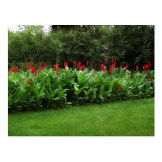 POSTCARD ~ GREENHOUSE PLANTS GARDEN OPEN BUSINESS