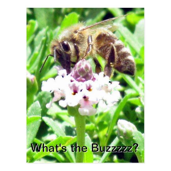 Postcard - Honeybee profile