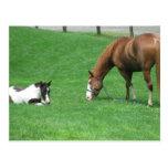 Postcard ~ Horses