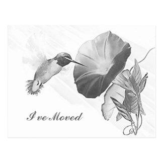 Postcard Hummingbird Morning Glory I ve Moved PC