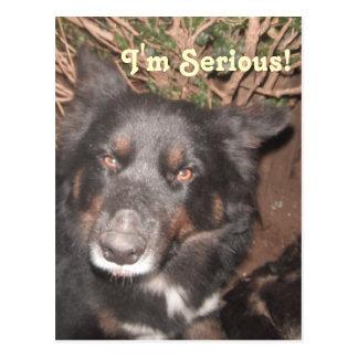 Postcard Husky Collie Cross