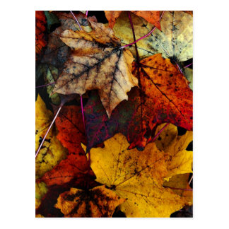 Postcard - 'I Love Fall' by Joanne Coyle