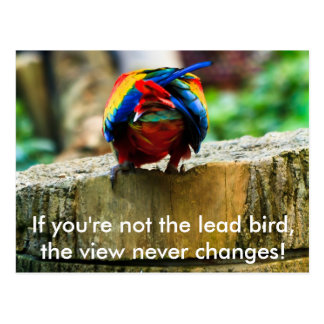 Postcard, If you're not the lead bird, Postcard